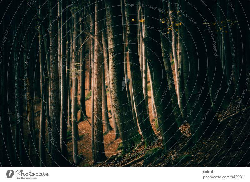Märchenwald Natur Landschaft Pflanze Herbst Baum Moos Wald ästhetisch dunkel elegant braun gold grün schwarz Blatt Buche Einsamkeit geheimnisvoll mystisch