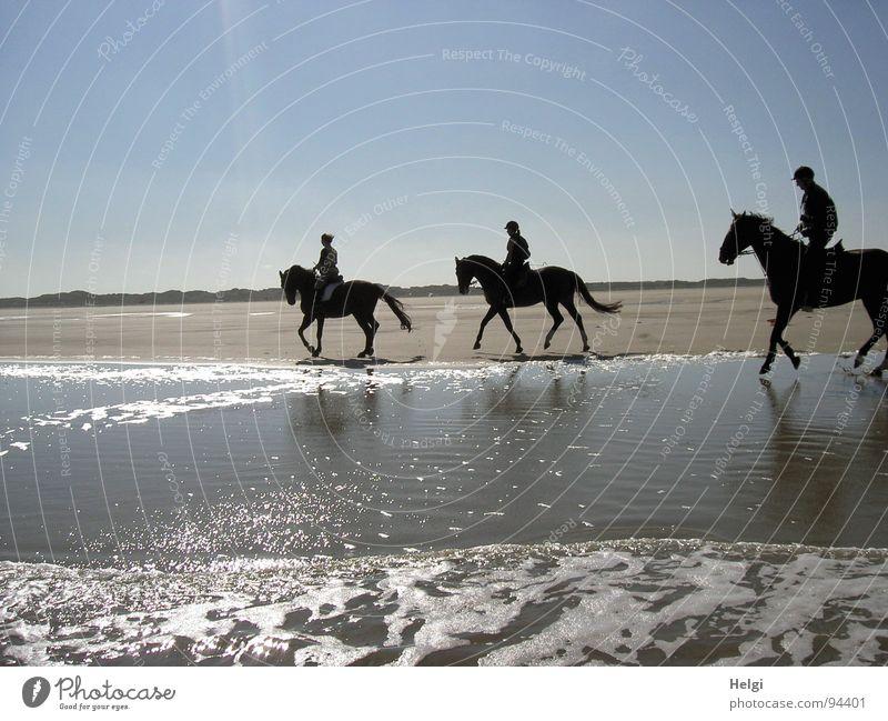 Silhouetten von drei Reitern bei Sonnenschein am Strand Gedeckte Farben Außenaufnahme Textfreiraum oben Tag Schatten Reflexion & Spiegelung Sonnenlicht