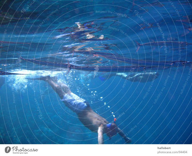 Malediven Water 05 Wasser Meer tauchen Riff Schnorcheln Unterwasseraufnahme