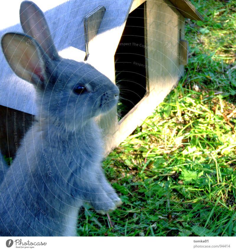 My home is my castle Natur blau Sommer Sonne Haus Tier Tierjunges Wiese Gebäude grau Freiheit Garten Geschwindigkeit niedlich süß Schutz