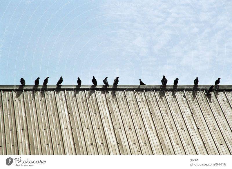 Vögel Himmel blau schwarz Wolken Gebäude braun Vogel Metall fliegen sitzen Industrie Ordnung trist USA Fabrik Dach
