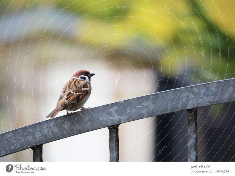 Herr Spatz von Sperling Natur schön grün weiß Erholung Einsamkeit Tier natürlich grau Glück Garten braun Vogel Metall Zufriedenheit Klima