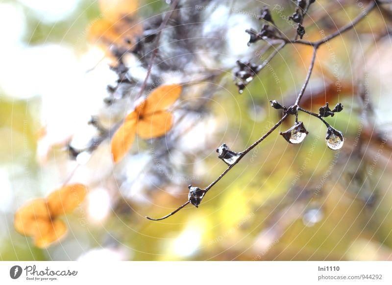 November Natur blau Pflanze schön weiß Wasser Blume Wolken schwarz Umwelt Herbst Blüte natürlich grau außergewöhnlich Garten