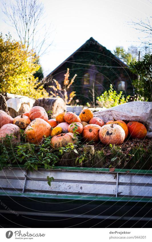 Kürbisse im Spreewald Ferien & Urlaub & Reisen Pflanze Landschaft Freude Haus Gesunde Ernährung Umwelt Herbst Gefühle Stimmung Tourismus Ausflug Schönes Wetter