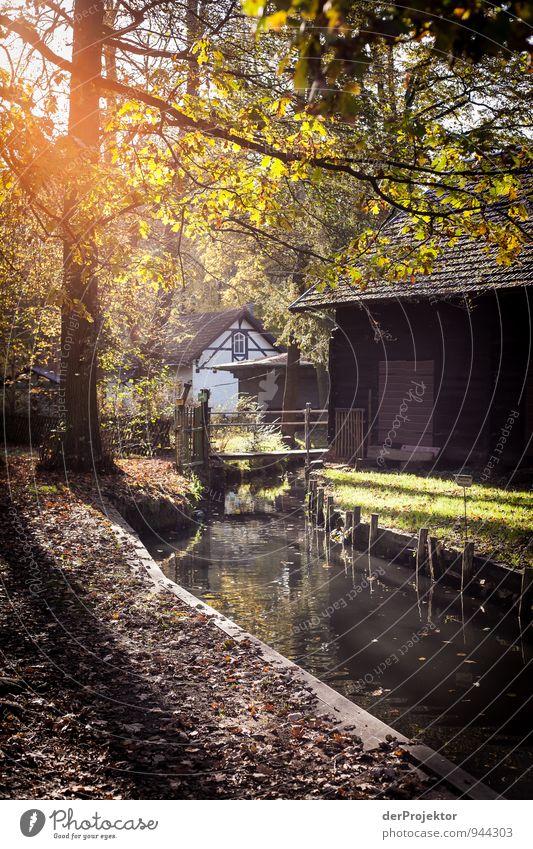 Kanale Grande im Spreewald Natur Ferien & Urlaub & Reisen Wasser Landschaft Haus Umwelt Herbst Gefühle Holz Freizeit & Hobby Tourismus wandern Ausflug Lebensfreude Abenteuer Fluss