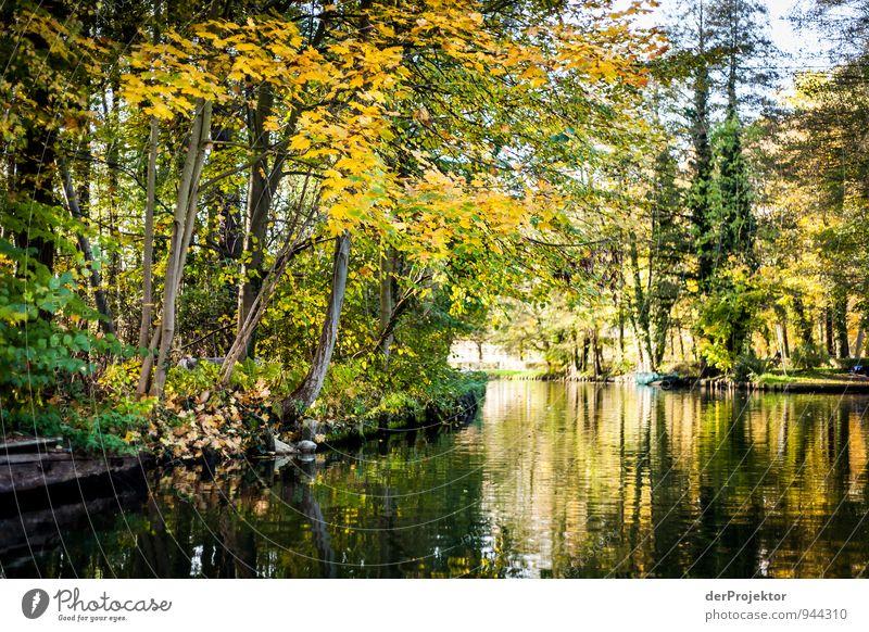 Still und ruhig liegt die Spree Natur Ferien & Urlaub & Reisen Pflanze grün Wasser Baum Landschaft Freude Umwelt gelb Herbst Gefühle Freizeit & Hobby Tourismus Ausflug Lebensfreude