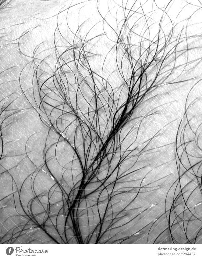 haarbaum* Baum Muster nass feucht Sauberkeit dünn Mann Anatomie Aussehen Brustbehaarung Beinbehaarung schwarz weiß zart nah Pflanze Sträucher Haut Falte
