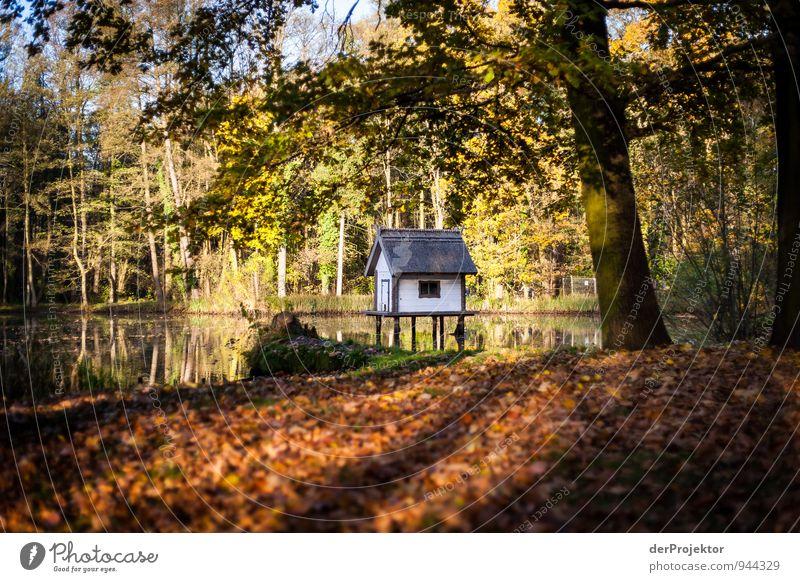 Schmuckes Haus im Grünen Natur Ferien & Urlaub & Reisen Pflanze Wasser Baum Landschaft Freude Umwelt Herbst Gefühle Gras Garten See Park Freizeit & Hobby Tourismus