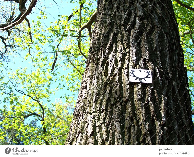 Hirschalarm grün Wald Blüte Frühling Ast Baumstamm Schönes Wetter Plakette