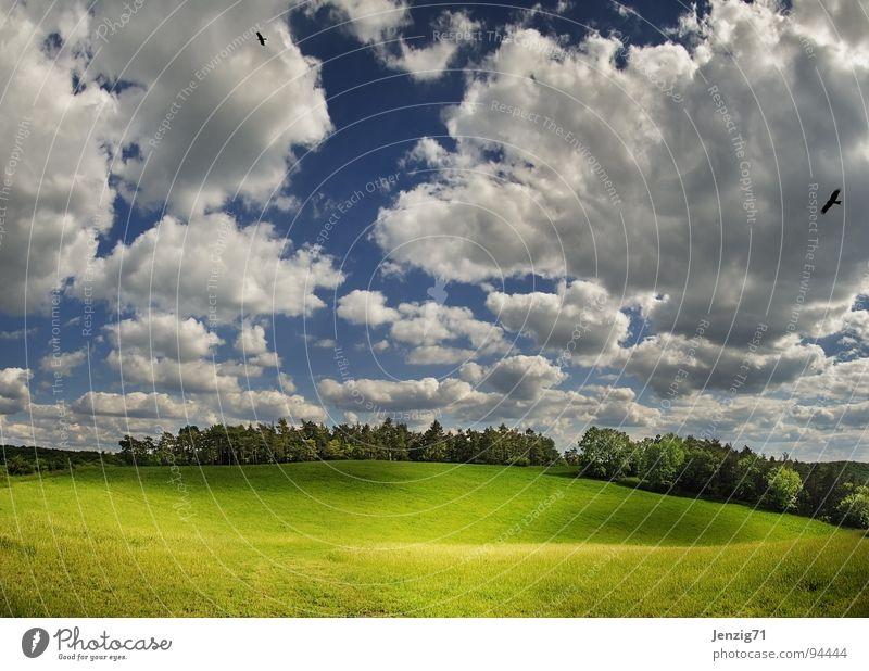 Stell doch Deine Schafe drauf! Natur Himmel Baum grün Sommer Wolken Wald Wiese Gras Luft groß Weide Jahreszeiten Grünfläche