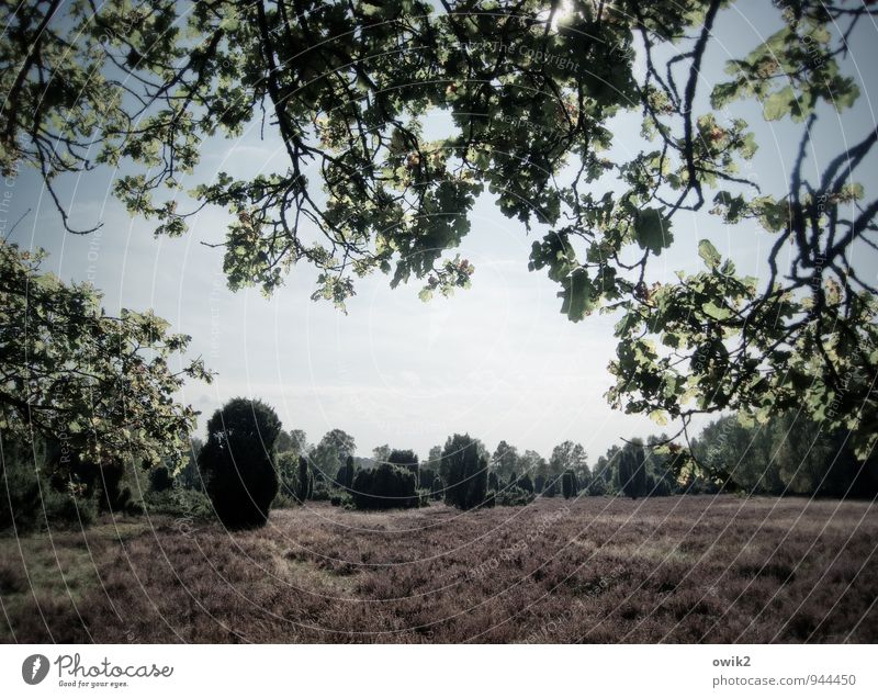 Lila Teppich Ferien & Urlaub & Reisen Ausflug Ferne Freiheit Umwelt Natur Landschaft Pflanze Himmel Wolken Horizont Klima Wetter Schönes Wetter Baum Sträucher
