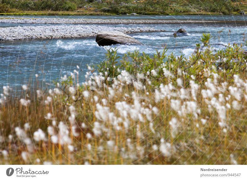 Trash 2015 | Wollgras Natur Ferien & Urlaub & Reisen Pflanze Sommer Wasser Erholung Landschaft Einsamkeit ruhig Gras natürlich frisch Idylle Blühend