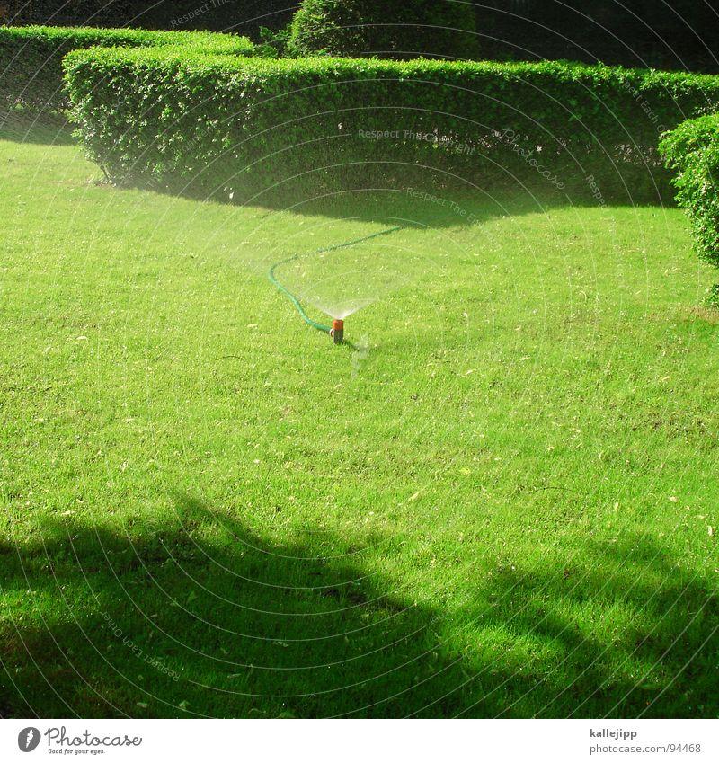 sprengmeister Rasensprenger gießen sprengen Gartenbau Park Hut Sträucher grün wasse landschaftsgärtner gartendesign begrünen Information botschaftsgarten