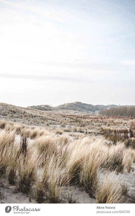 Dünenlandschaft Himmel Natur Ferien & Urlaub & Reisen blau grün weiß Erholung Landschaft Wolken Wiese Gras Sand braun Sträucher Schönes Wetter Stranddüne