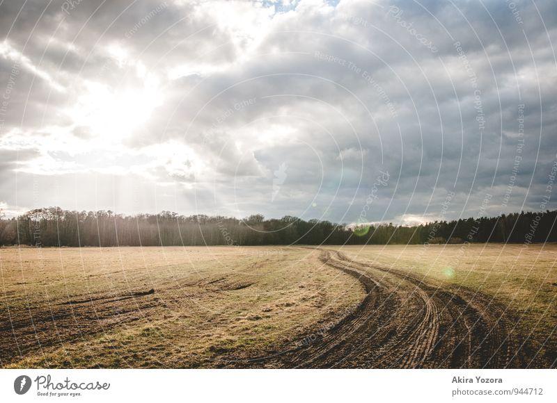 Auf dem richtigen Weg Natur Landschaft Himmel Wolken Sonnenlicht Wetter Baum Feld berühren leuchten hell natürlich blau braun grau grün schwarz weiß Optimismus