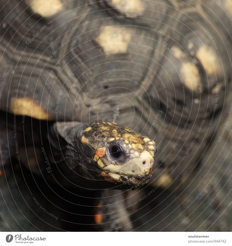 Immer mit der Ruhe... Natur Tier Haustier 1 Zufriedenheit Lebensfreude Cross Processing digital-cross Falschfarben Entschleunigung Schildkröte