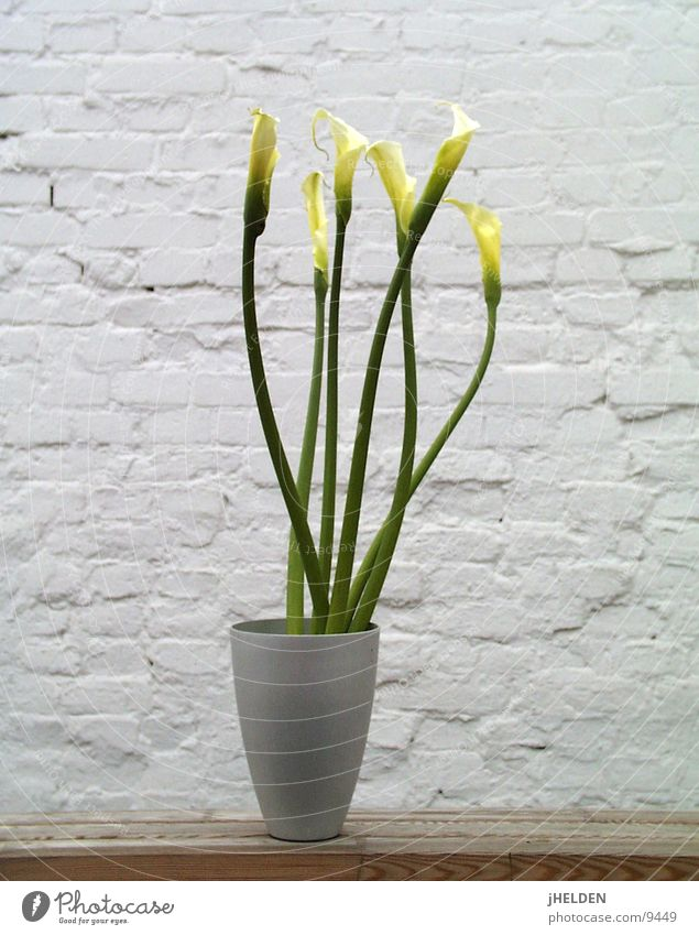 Kallas 04 Freude Sommer Pflanze Frühling Blume Blüte Mauer Wand Holz springen Coolness kalt weiß Lilien neutral minimalistisch Zen Vase Holzmehl Dia Am Rand