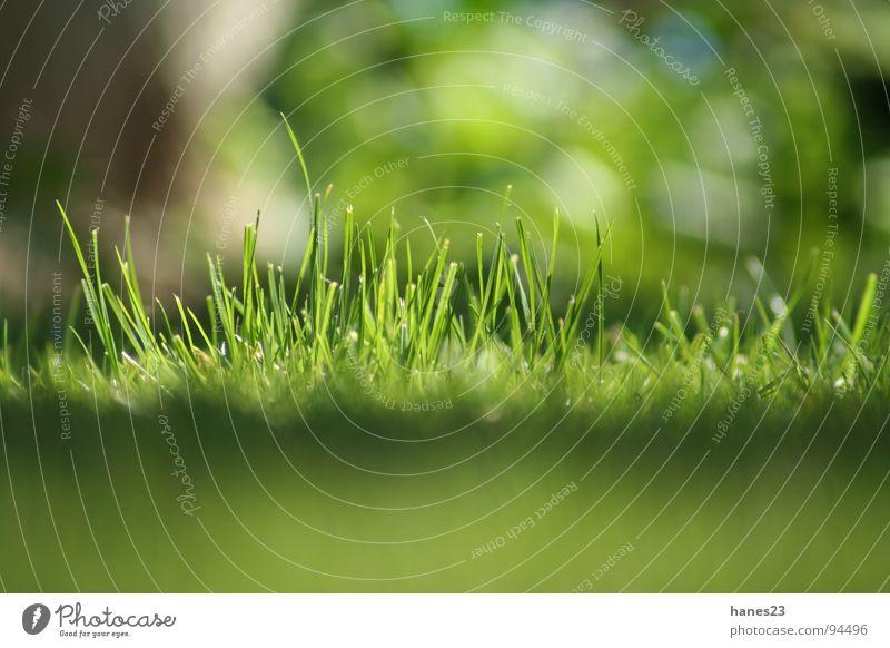 Grasgeflüster #2 Frühling Sommer Wiese grün Tiefenschärfe Froschperspektive Makroaufnahme Nahaufnahme Sonne Rasen Garten
