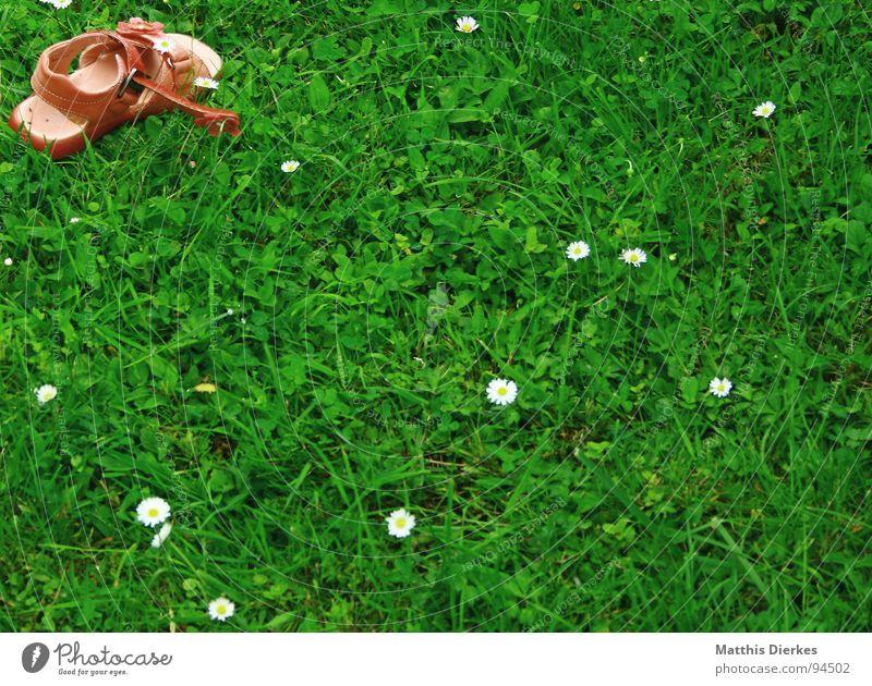 MODE Sommer Freude ruhig Erholung Leben oben Gras klein Kindheit Schuhe rosa Ecke Rasen genießen Wohlgefühl Gänseblümchen
