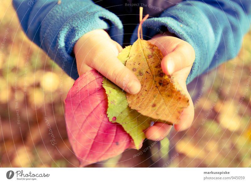 herbst in der kita Mensch Kind Hand Blatt Freude Wärme Herbst Spielen Glück maskulin Kindheit Arme beobachten Finger lernen berühren