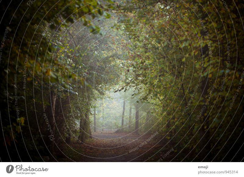 vor dem Schnee Natur grün Landschaft Wald Umwelt Herbst natürlich Nebel