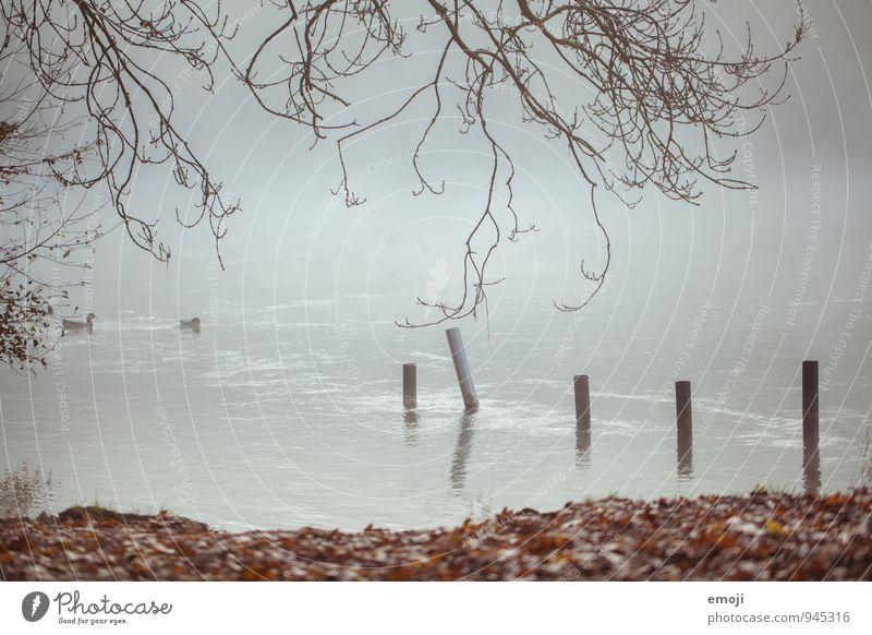 Herbst Umwelt Natur Landschaft schlechtes Wetter Nebel See natürlich grau Farbfoto Gedeckte Farben Außenaufnahme Menschenleer Tag Schwache Tiefenschärfe