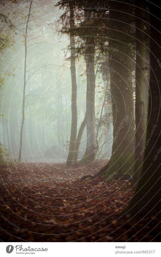 Wald Umwelt Natur Landschaft Herbst schlechtes Wetter Nebel Pflanze Baum dunkel natürlich Farbfoto Außenaufnahme Menschenleer Dämmerung Schwache Tiefenschärfe