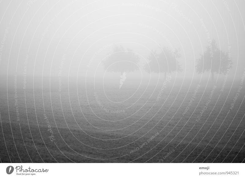 .oO Natur Baum Landschaft dunkel Umwelt kalt Herbst Wiese Nebel schlechtes Wetter