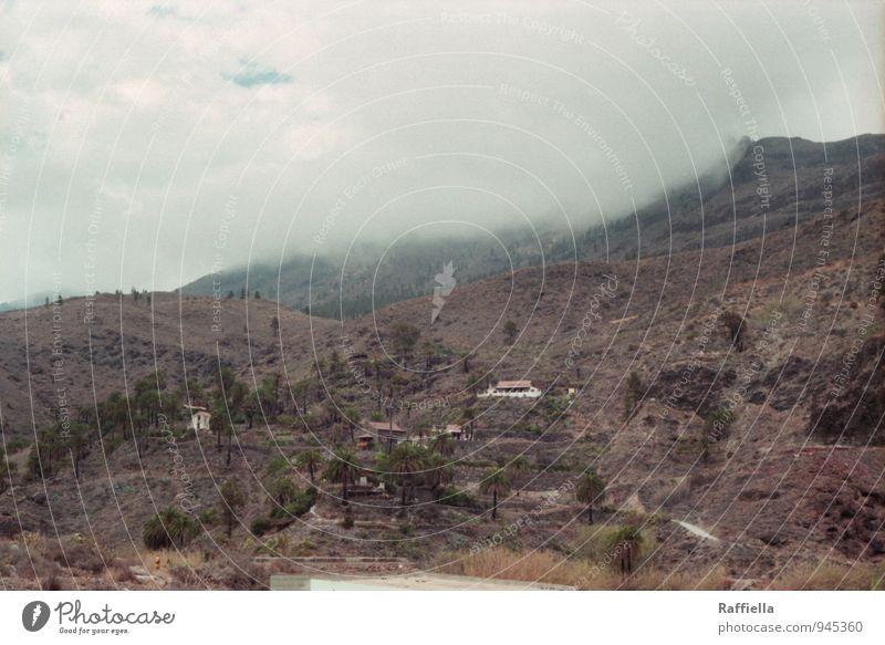 fallen touch Umwelt Natur Landschaft Erde Himmel Wolken schlechtes Wetter Pflanze Palme Hügel Felsen Berge u. Gebirge trist braun grau Gran Canaria Farbfoto