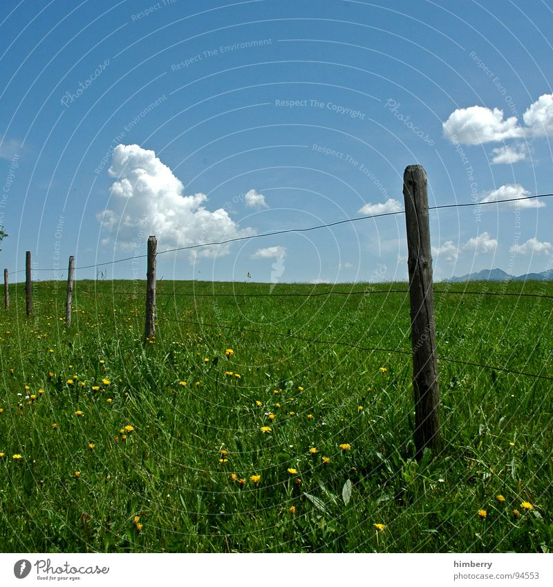 fency grassland Natur Himmel Blume Sommer Wolken Wiese Blüte Gras Berge u. Gebirge Landschaft Hügel Weide Zaun Barriere Pfosten Allgäu