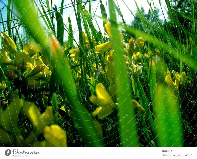 Sunday green Natur Pflanze gelb springen
