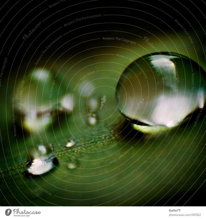 After rain nass feucht Blatt Reflexion & Spiegelung nah grün rund Makroaufnahme Nahaufnahme Wassertropfen reflektion Elektrizität Natur drop Regen