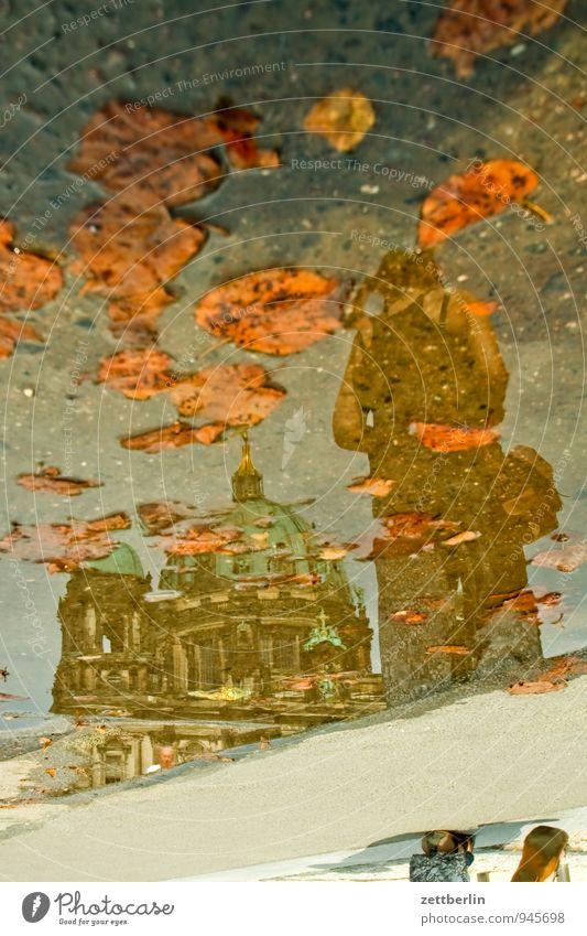 Berliner Dom Stadt Wasser Sommer Blatt Herbst Architektur Religion & Glaube Deutschland Tourismus Kirche Textfreiraum Regenwasser Mitte Spiegel Hauptstadt