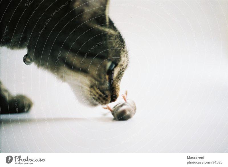 Mörder II Katze Auge Gesunde Ernährung Tod Spielen Beine Rücken gefährlich Ernährung bedrohlich Abenteuer Fell Jagd Geruch Säugetier Bauch