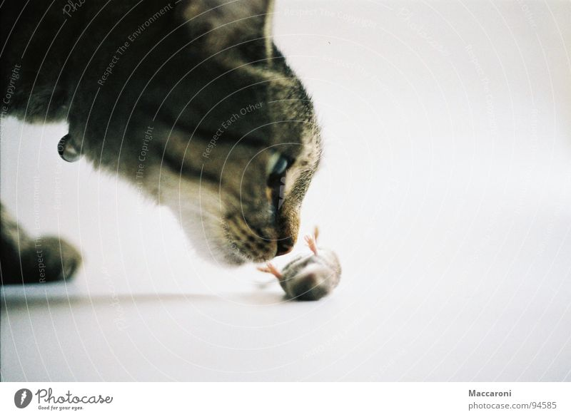 Mörder II Katze Auge Gesunde Ernährung Tod Spielen Beine Rücken gefährlich bedrohlich Abenteuer Fell Jagd Geruch Säugetier Bauch