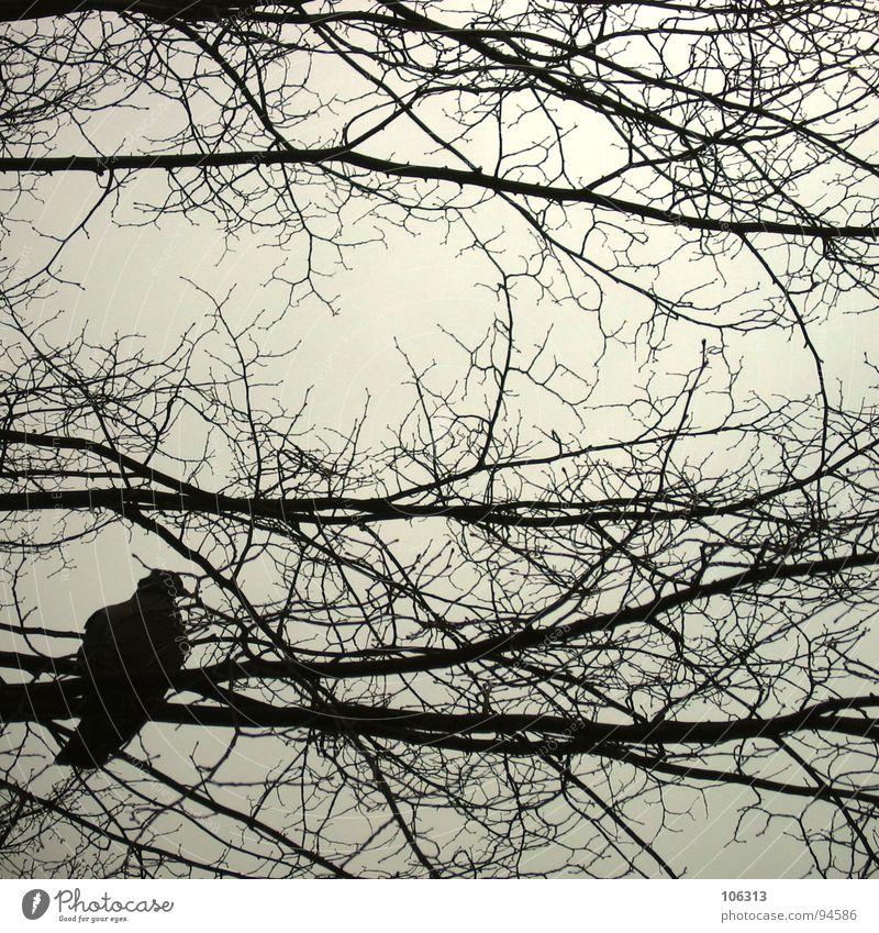 F. REISEIN... (II) Vogel Taube Geäst Baum Silhouette Frieden Sicherheit frei fliegen Natur Freiheit frei sein ... Wandel & Veränderung Irritation
