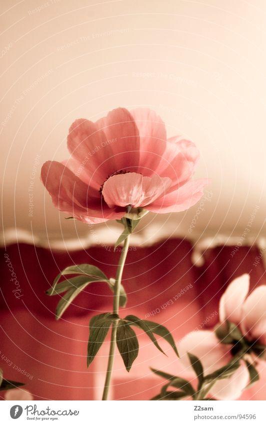 muttertag Natur rot Blume rosa Wachstum Spiegel Baumstamm aufwärts Muttertag