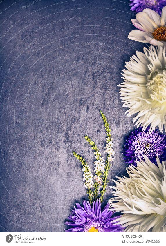 zusammensetzung wei en dahlien und lila astern blumen ein lizenzfreies stock foto von photocase. Black Bedroom Furniture Sets. Home Design Ideas