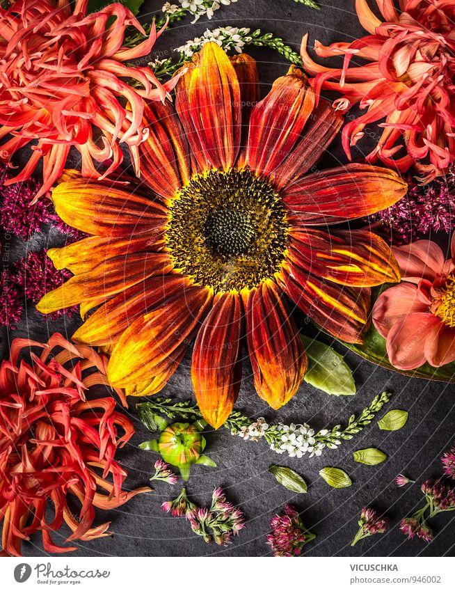 Sonnenblume und Dahlien Natur Pflanze Sommer Blume Haus dunkel gelb Leben Herbst Stil Garten Lifestyle orange Freizeit & Hobby Design Dekoration & Verzierung