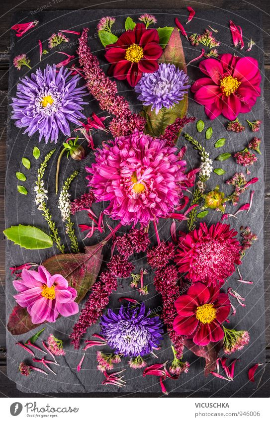 Zusammensetzung der Herbstblumen mit Astern , Dahlien Design Leben Freizeit & Hobby Sommer Natur Pflanze Blume Blumenstrauß Hintergrundbild beautiful Floristik