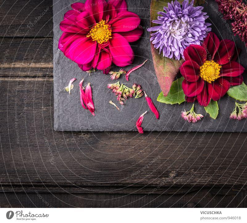 Herbst Blumen auf dunklem Holztisch Natur Pflanze grün Sommer rot Blatt Haus schwarz dunkel gelb Hintergrundbild Stein Garten