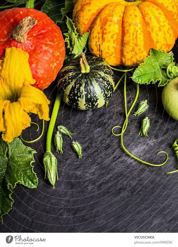 Verschiedene Kürbis mit Blüten und Blätter Natur Pflanze Herbst Stil Hintergrundbild Garten Lebensmittel Dekoration & Verzierung Design Ernährung Gemüse Ernte