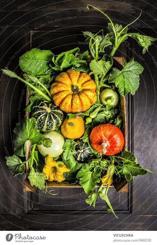Kürbisse in Holzkiste mit Stengel, Blätter und Blumen Natur alt Pflanze grün Sommer rot Blume Haus schwarz gelb Herbst Holz Garten braun Lebensmittel Lifestyle