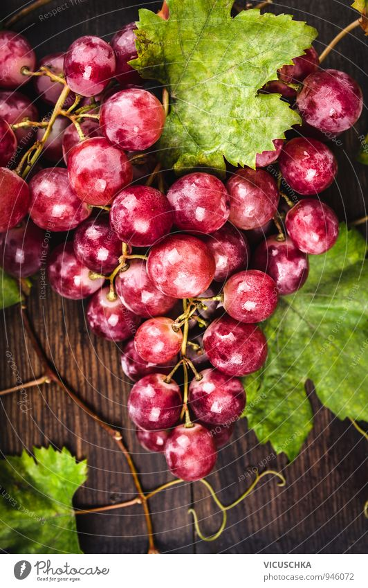 Große rosa Trauben mit Reben und Blätter Lebensmittel Frucht Ernährung Bioprodukte Diät Design Natur Garten Weintrauben Blatt frisch Ernte Tisch Holz dunkel