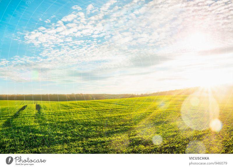 Morgen Landschaft mit grünen Feld in Sonnenstrahlen Himmel Natur blau Pflanze Sommer Wolken Umwelt gelb Wiese Gras Beleuchtung Hintergrundbild Horizont