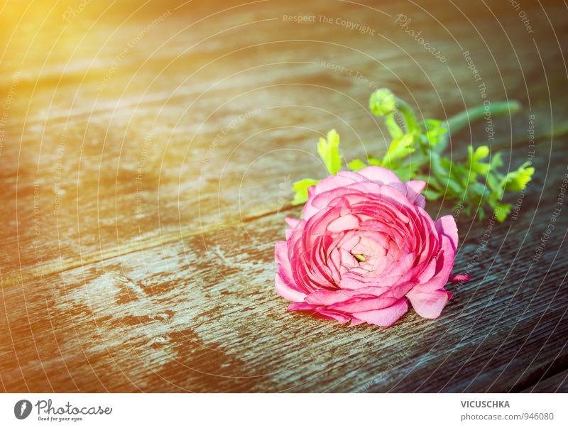Rose auf alten Holztisch in Sonnenstrahlen Pflanze Sommer Blume gelb Herbst Gefühle Liebe Frühling Feste & Feiern Garten springen rosa Freizeit & Hobby