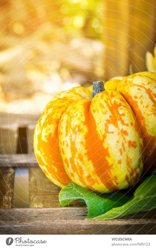 Sonnige Kürbis auf Holzkiste in Garten Natur grün Sommer Blatt gelb Herbst Stil Lebensmittel orange Design Ernährung Schönes Wetter Symbole & Metaphern Gemüse