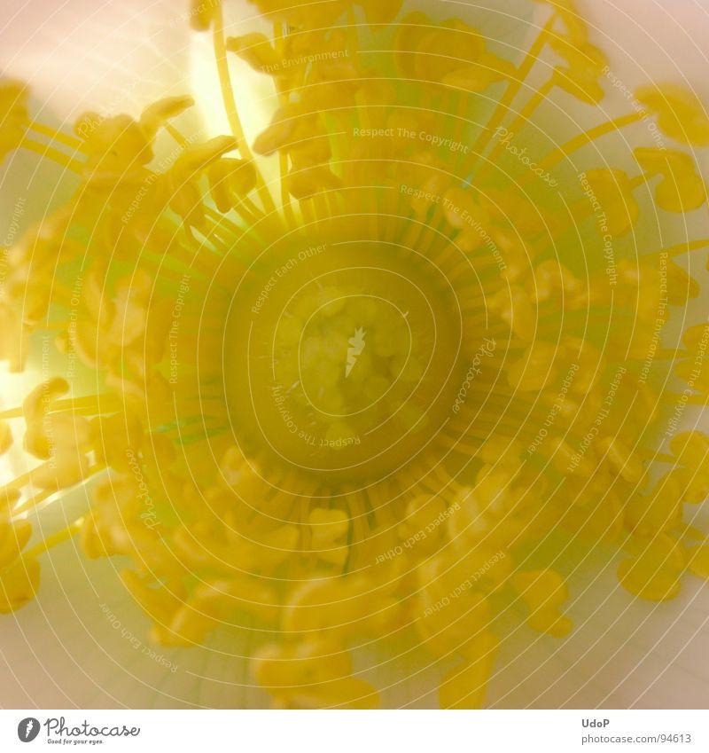 Stempelwald weiß gelb Blüte Frühling Stempel Blütenblatt
