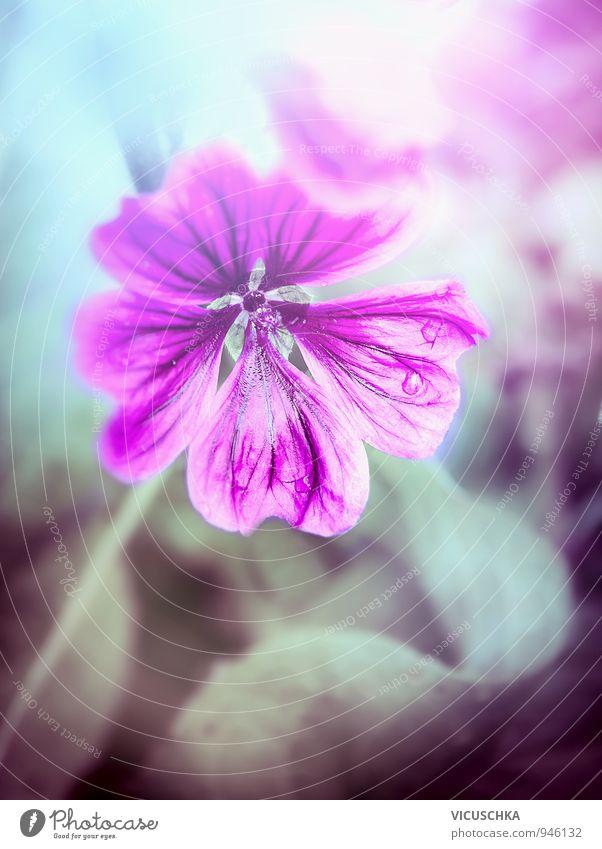 Wilde Malve, Blumen Hintergrund Natur Pflanze dunkel Wiese Hintergrundbild Garten rosa Park wild Design Wassertropfen violett Blumenstrauß Wildpflanze