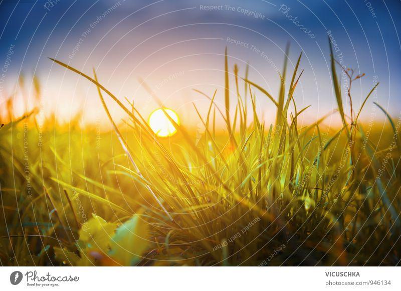 Herbst Gras auf Sonnenuntergang Himmel Natur blau Pflanze Sommer Sonne Umwelt gelb Herbst Wiese Gras Hintergrundbild Garten Horizont Park Feld